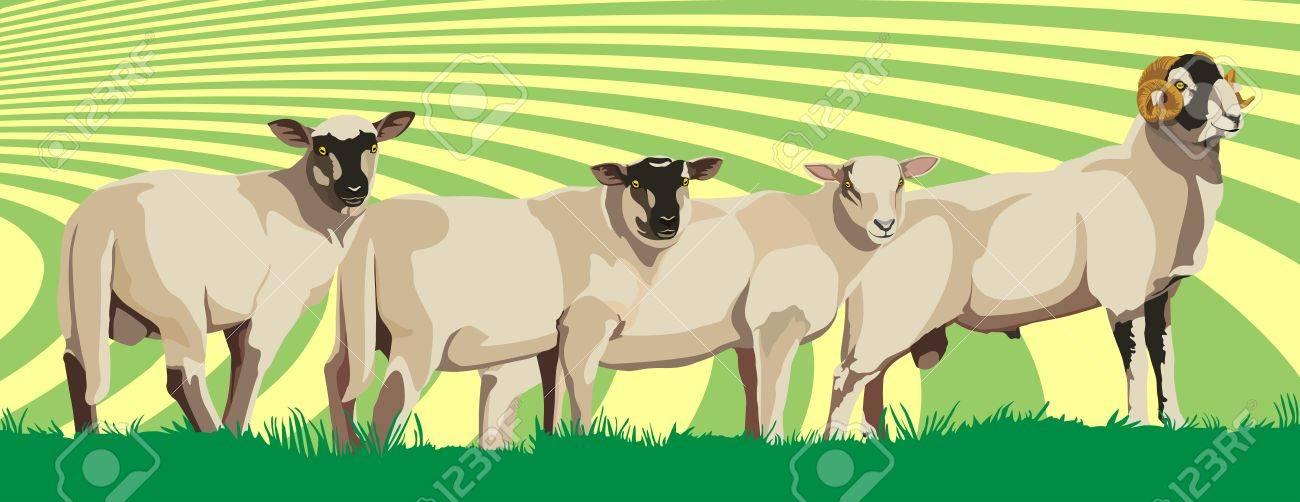 sheep Stock Vector - 17958951