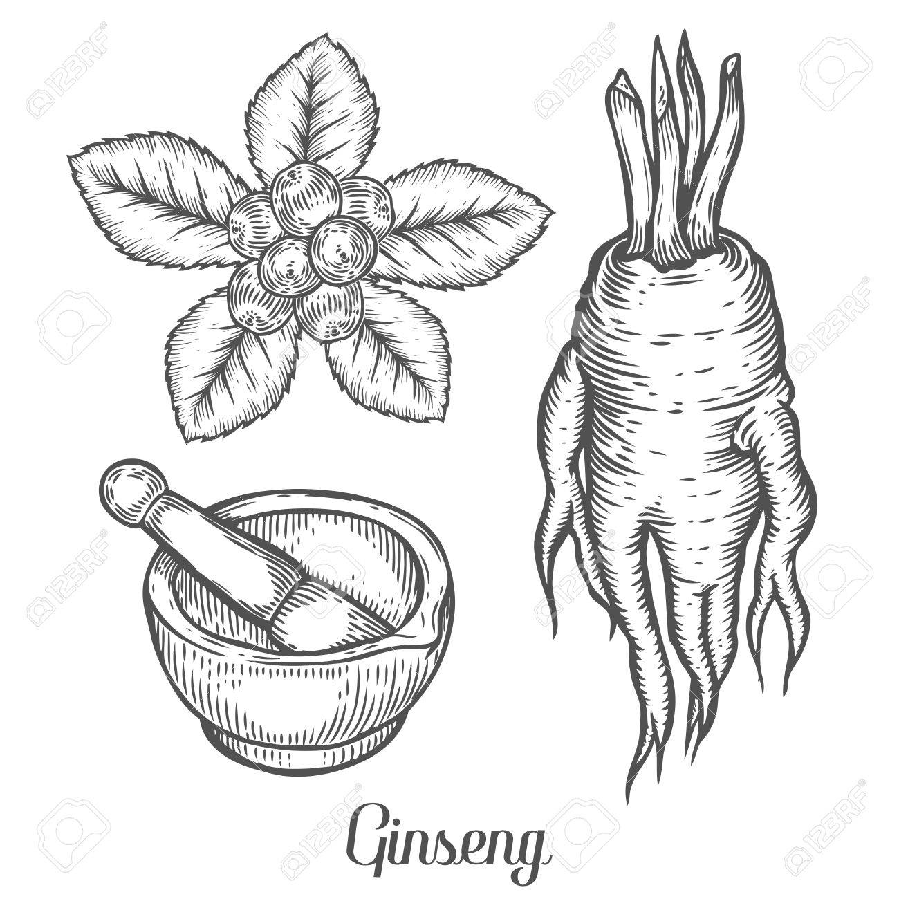 ginseng root leaf berry plant with mortar and pestle black Kimchi Korean Food ginseng root leaf berry plant with mortar and pestle black isolated on