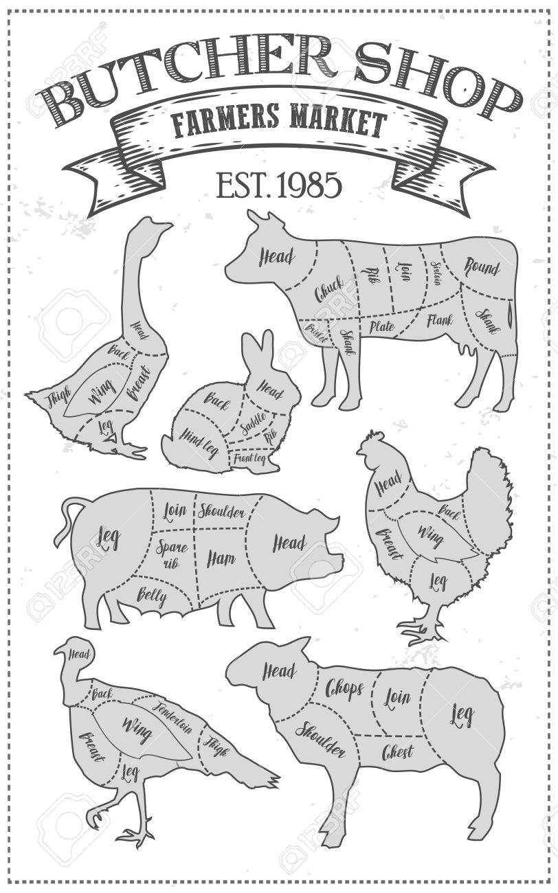 68335433 cutting meat diagram guide cut scheme in vintage style chalk illustration graphic element for menu b cutting meat diagram guide cut scheme in vintage style chalk