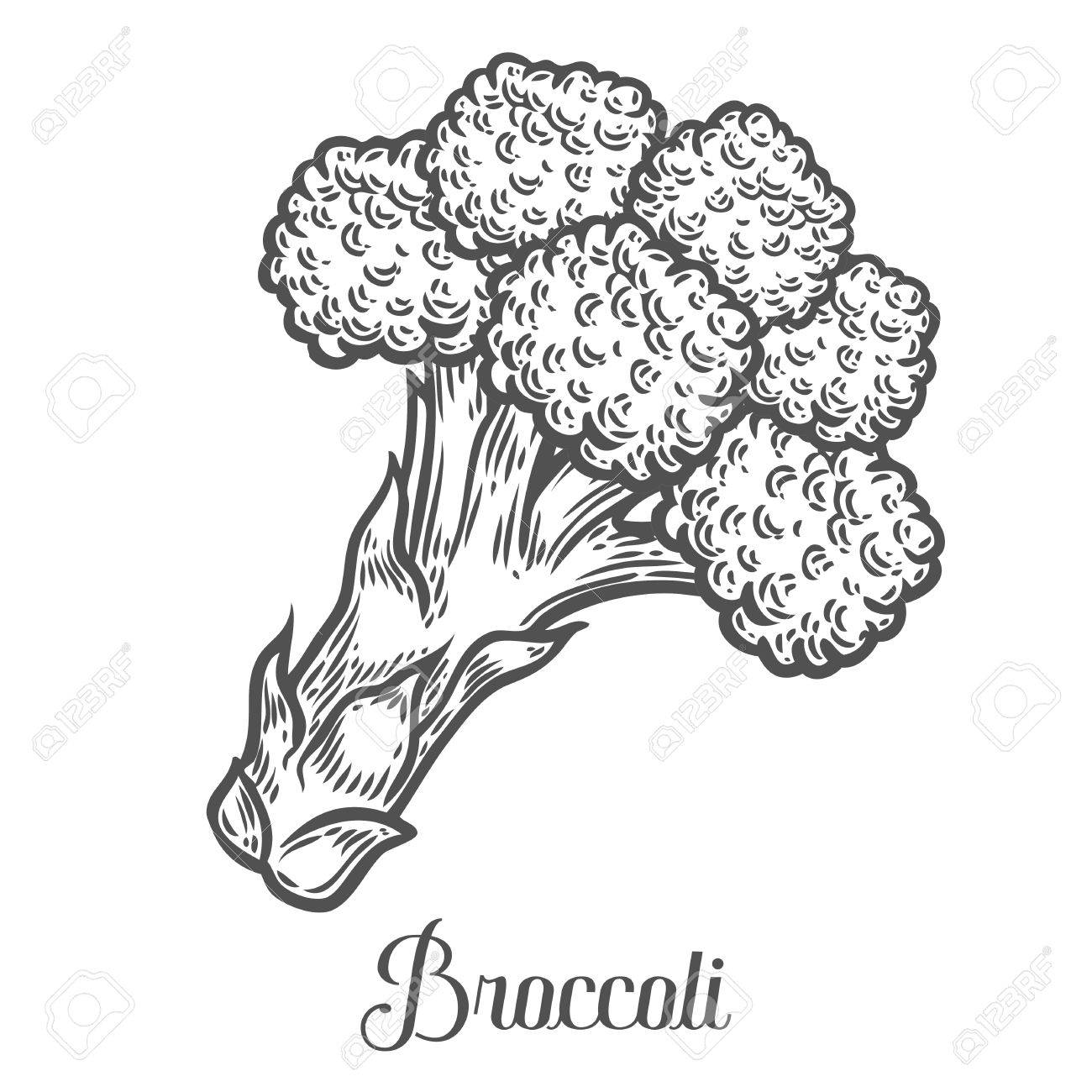 broccoli vector isolated on white background broccoli food royalty free cliparts vectors and stock illustration image 68335444 broccoli vector isolated on white background broccoli food