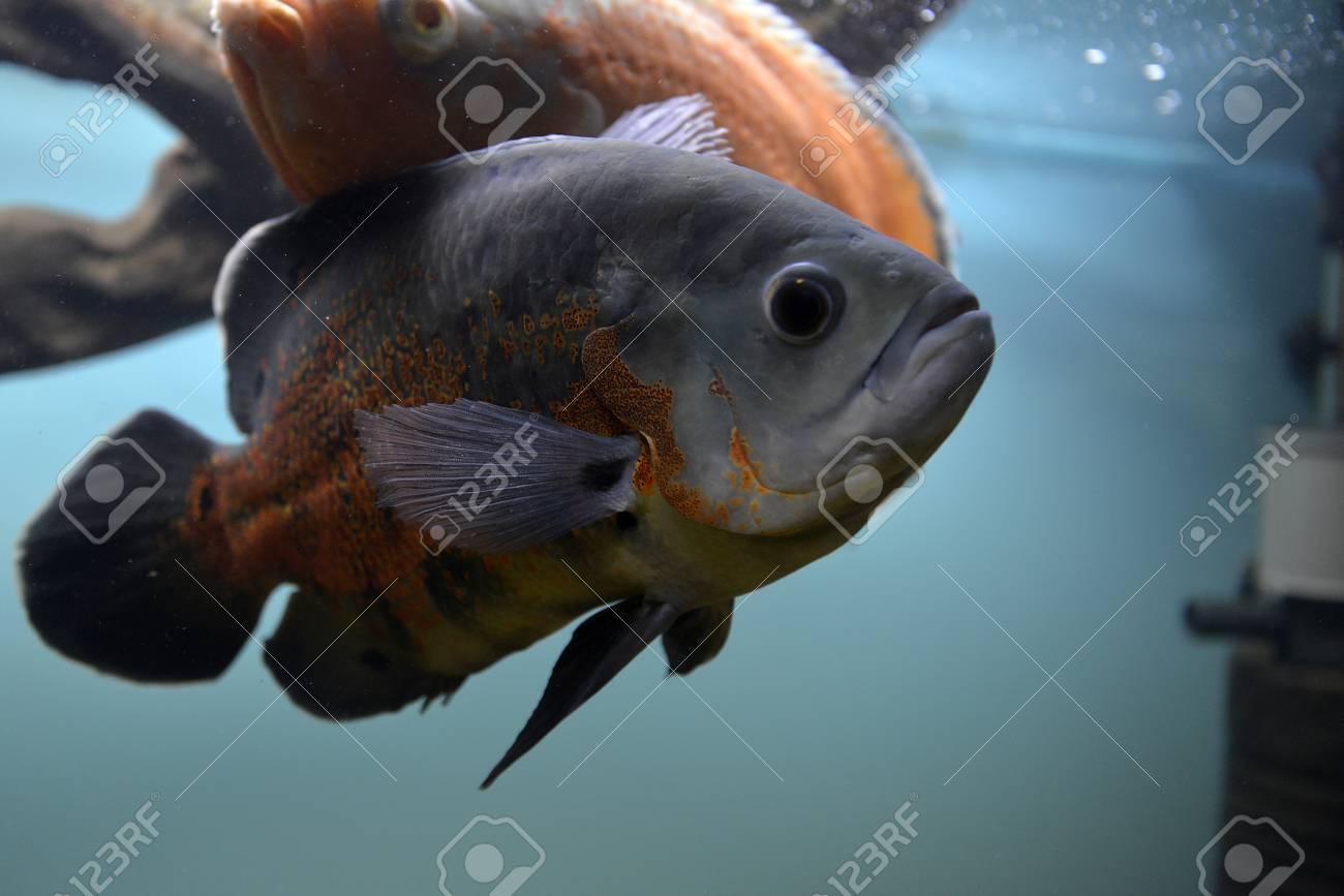 pesci che risalgono acquario