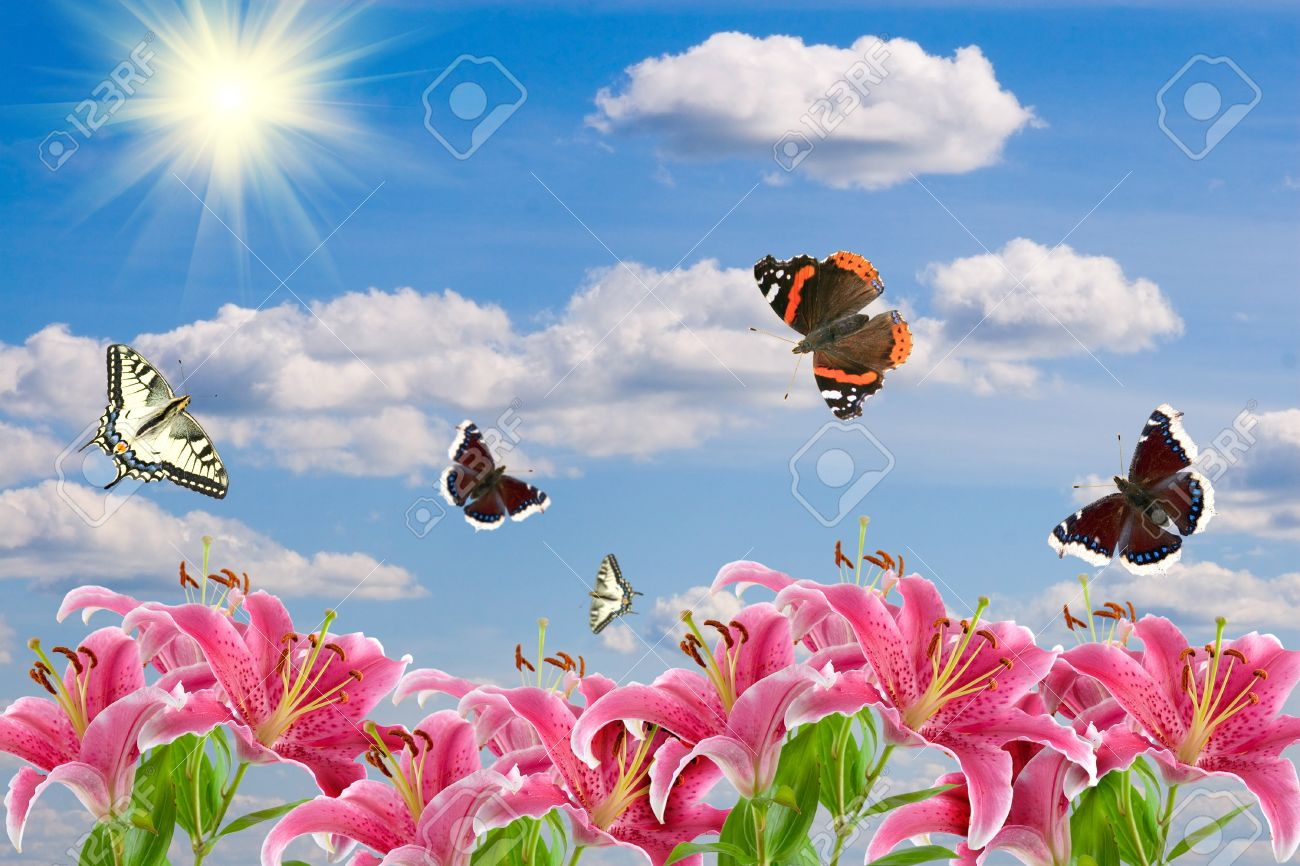 butterfly lily images u0026 stock pictures royalty free butterfly