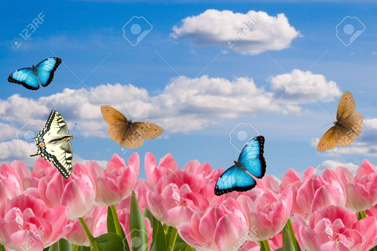 composition from spring flowers and butterflies on a background