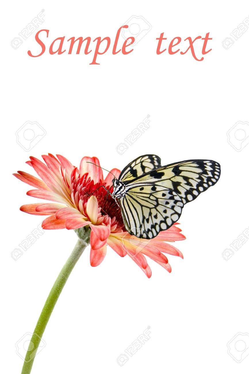 Tropical butterfly on a flower isolated on a white background Stock Photo - 10621319