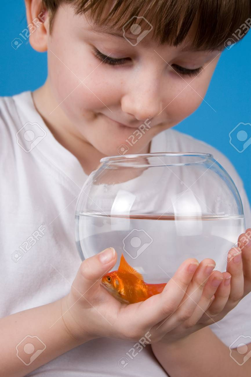 Boy holds a fishbowl with a goldfish on a blue background Stock Photo - 13865178