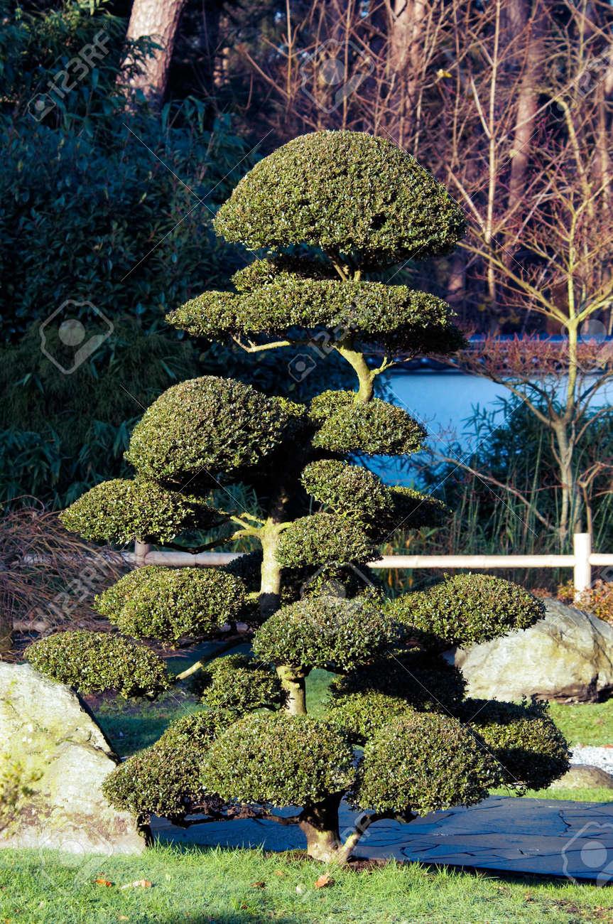 Bonsai baum garten  Bonsai-Baum Im Japanischen Garten Lizenzfreie Fotos, Bilder Und ...