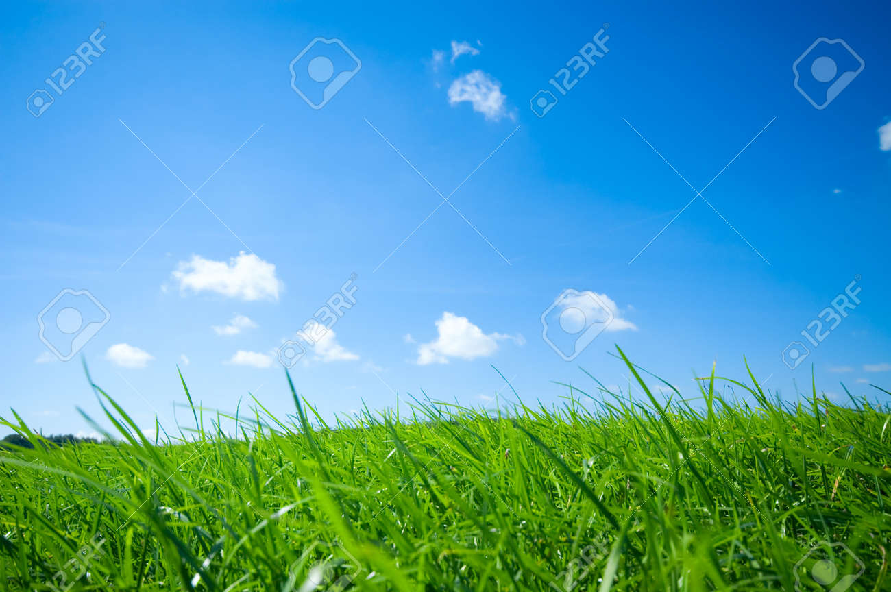 fresh green grass with bright blue sky background Stock Photo - 1446276