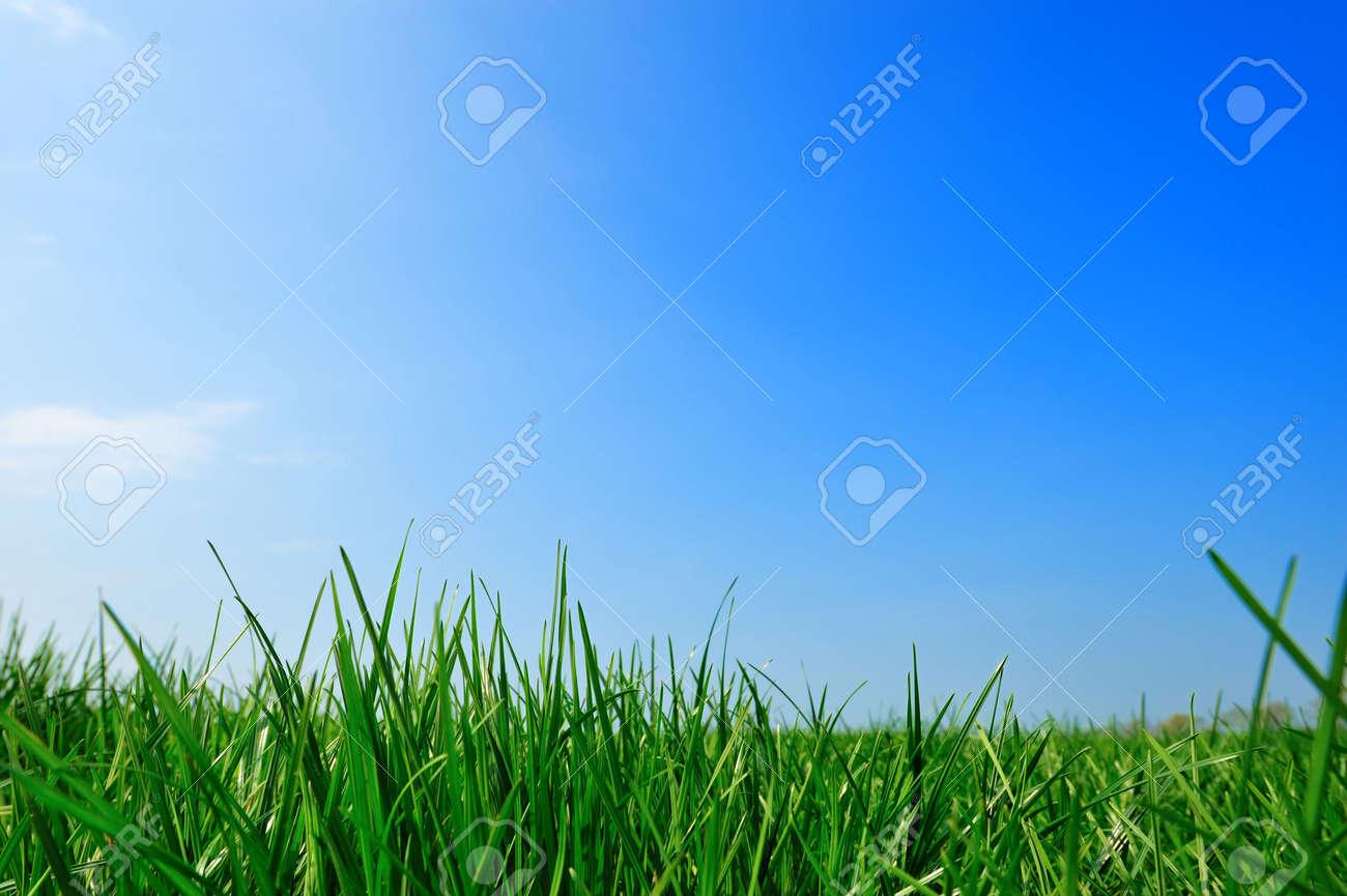 fresh green grass summer background Standard-Bild - 4685100