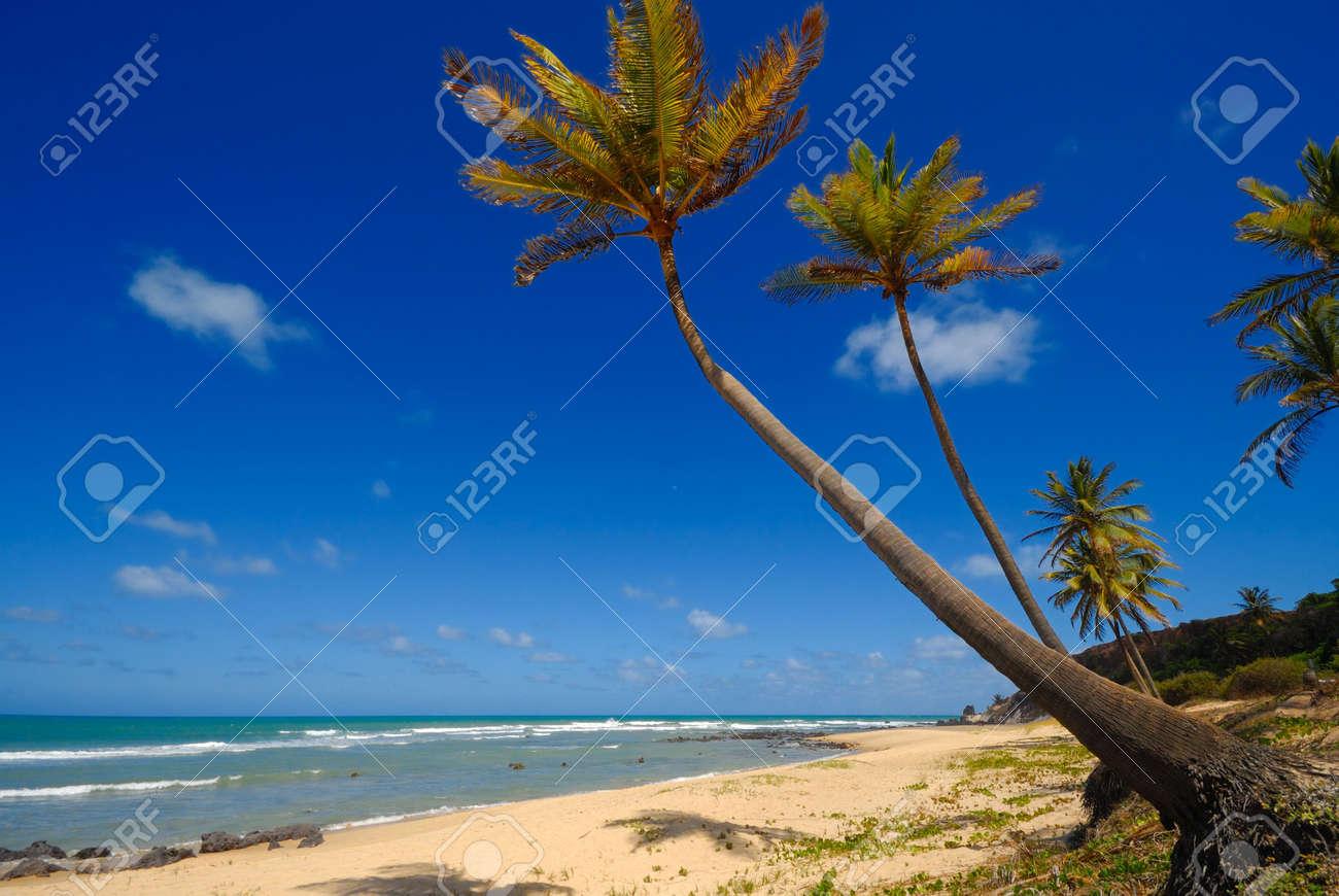 Palm trees and a beautiful beach at Praia do Amor near Pipa Brazil Standard-Bild - 6063926