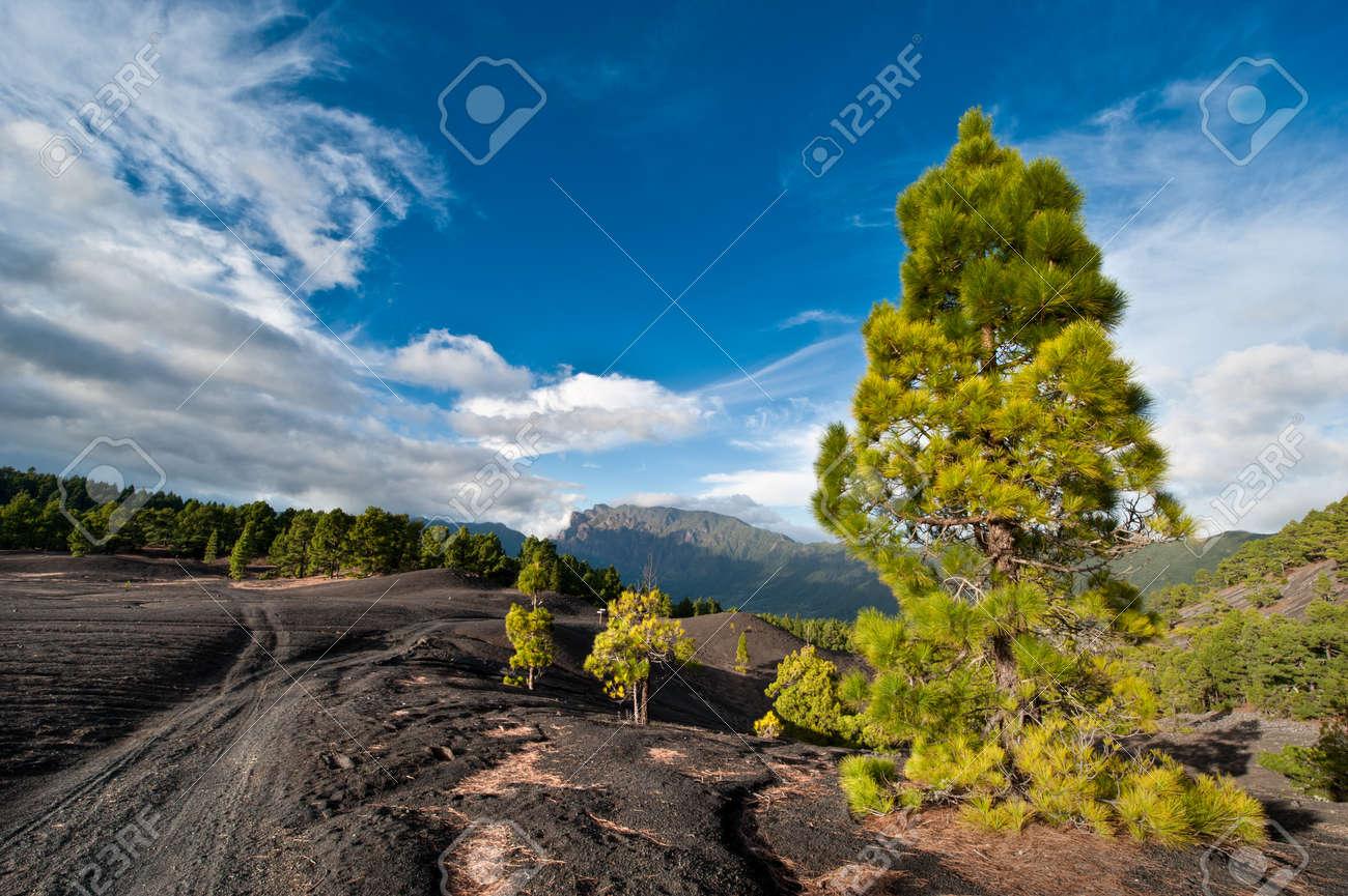 Dirt road through the beautiful lava landscape on the Cumbre Nueva in La Palma, Canary islands, Spain Standard-Bild - 8811721