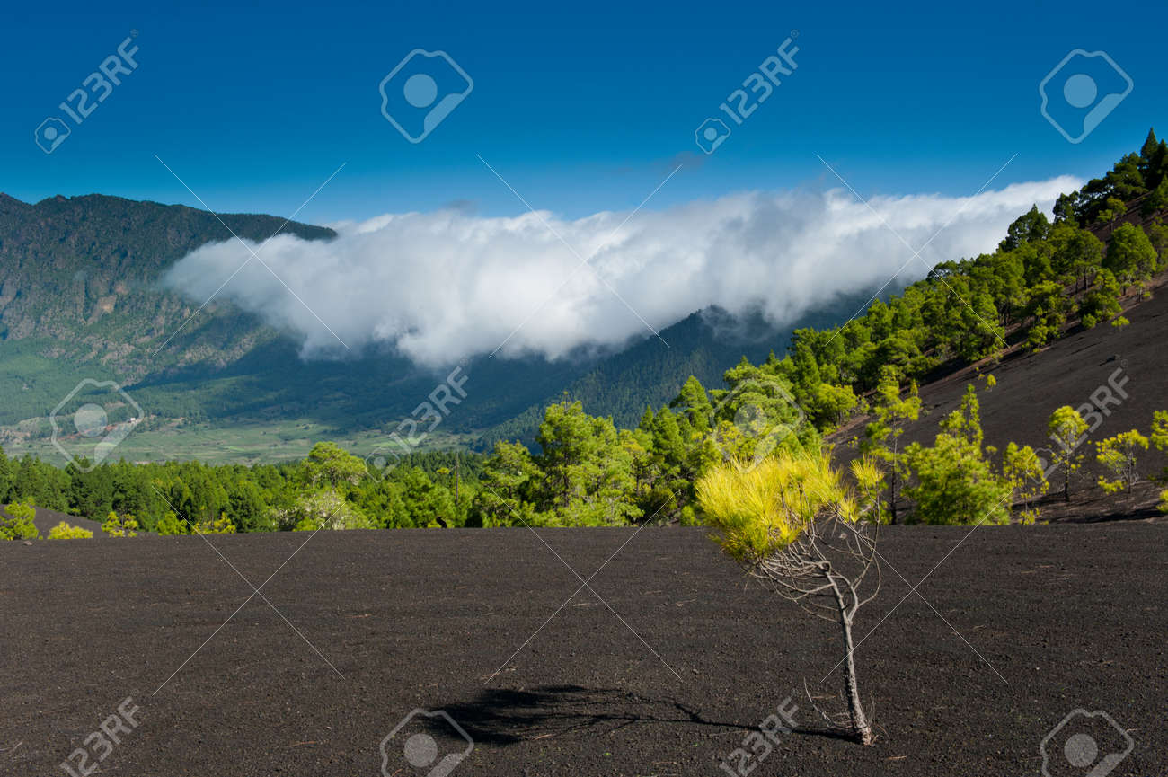 Beautiful lava landscape on the Cumbre Nueva in La Palma, Canary islands, Spain Standard-Bild - 8811704