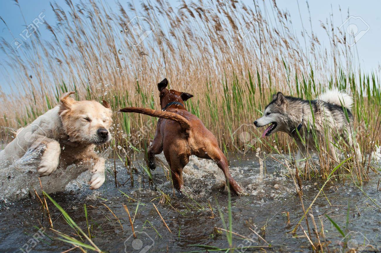 Cute dogs having fun in the water Standard-Bild - 9438432