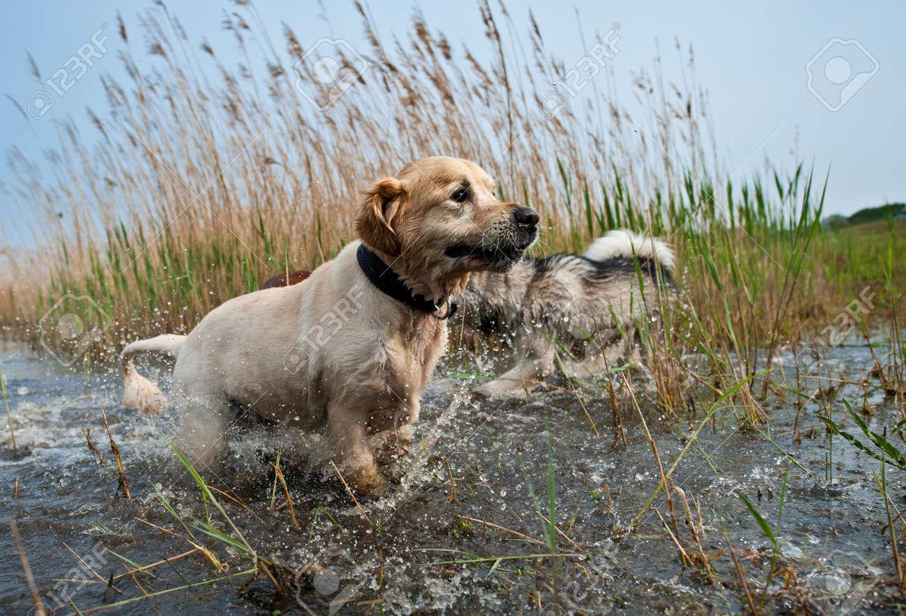 Cute dogs having fun in the water Stock Photo - 9438480