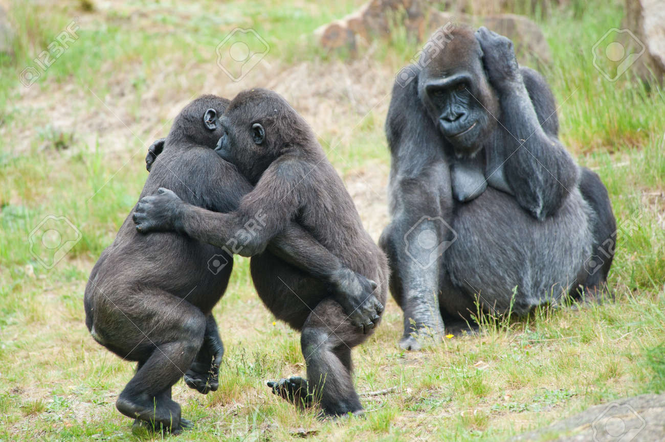 Two young gorillas dancing while the mother is watching Standard-Bild - 9993688