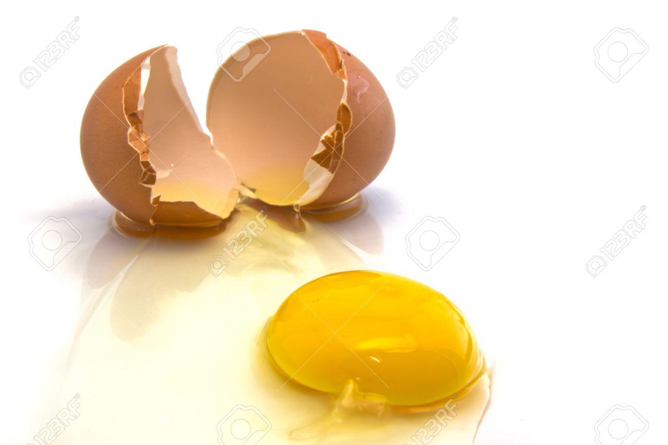 albumin from chicken egg white