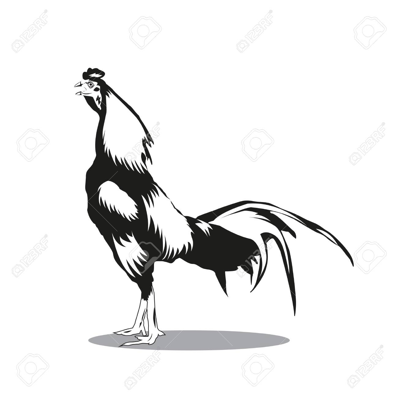 Cock Black And White