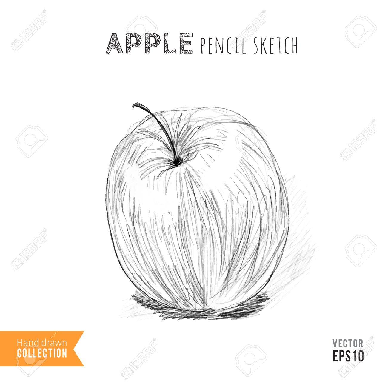 Hand drawn apple pencil sketch on white vector illustration