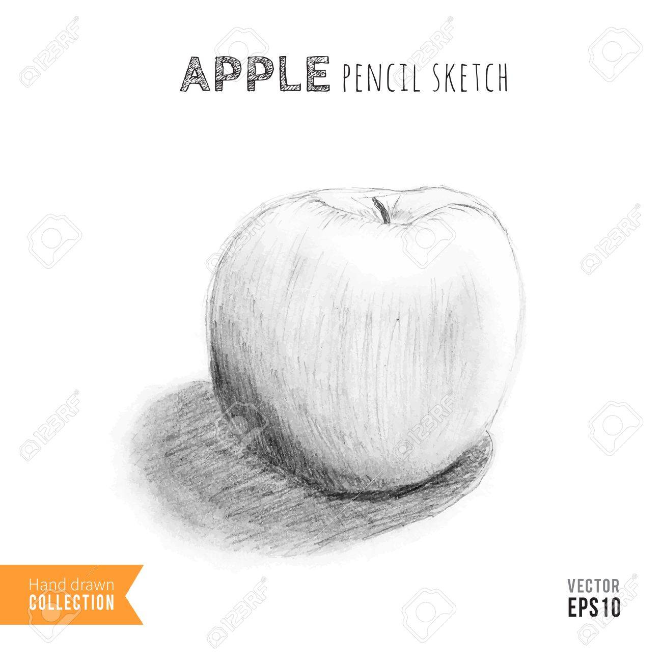 Apple hand drawn pencil sketch training drawing vector illustration stock vector 42340040