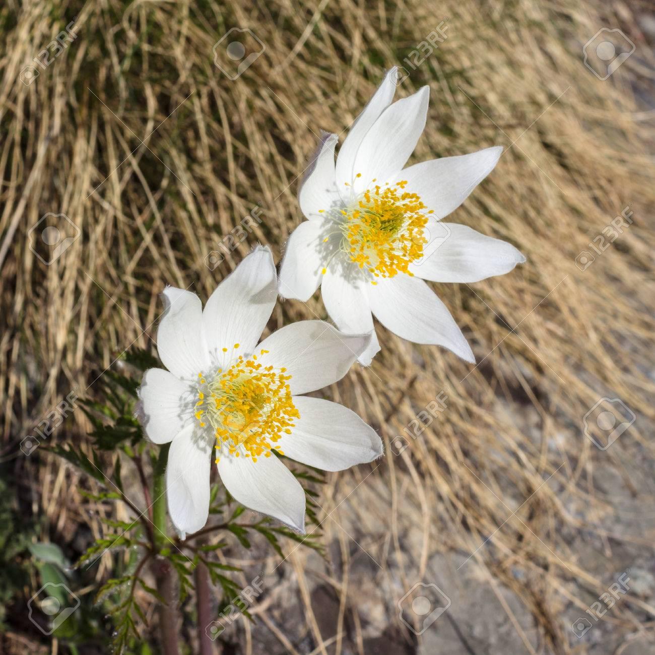 Alpina Flower Valley