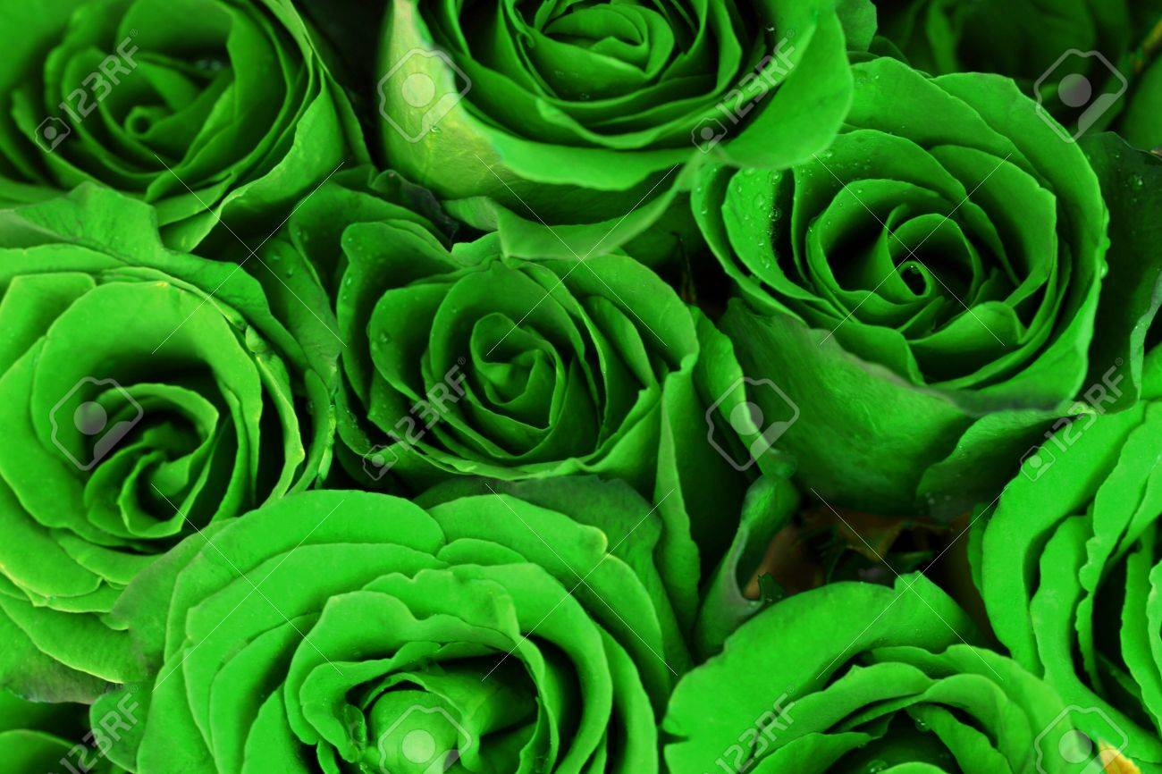 Green Roses Bouquet As Background Stock Photo Picture And Royalty Free Image Image 30807909