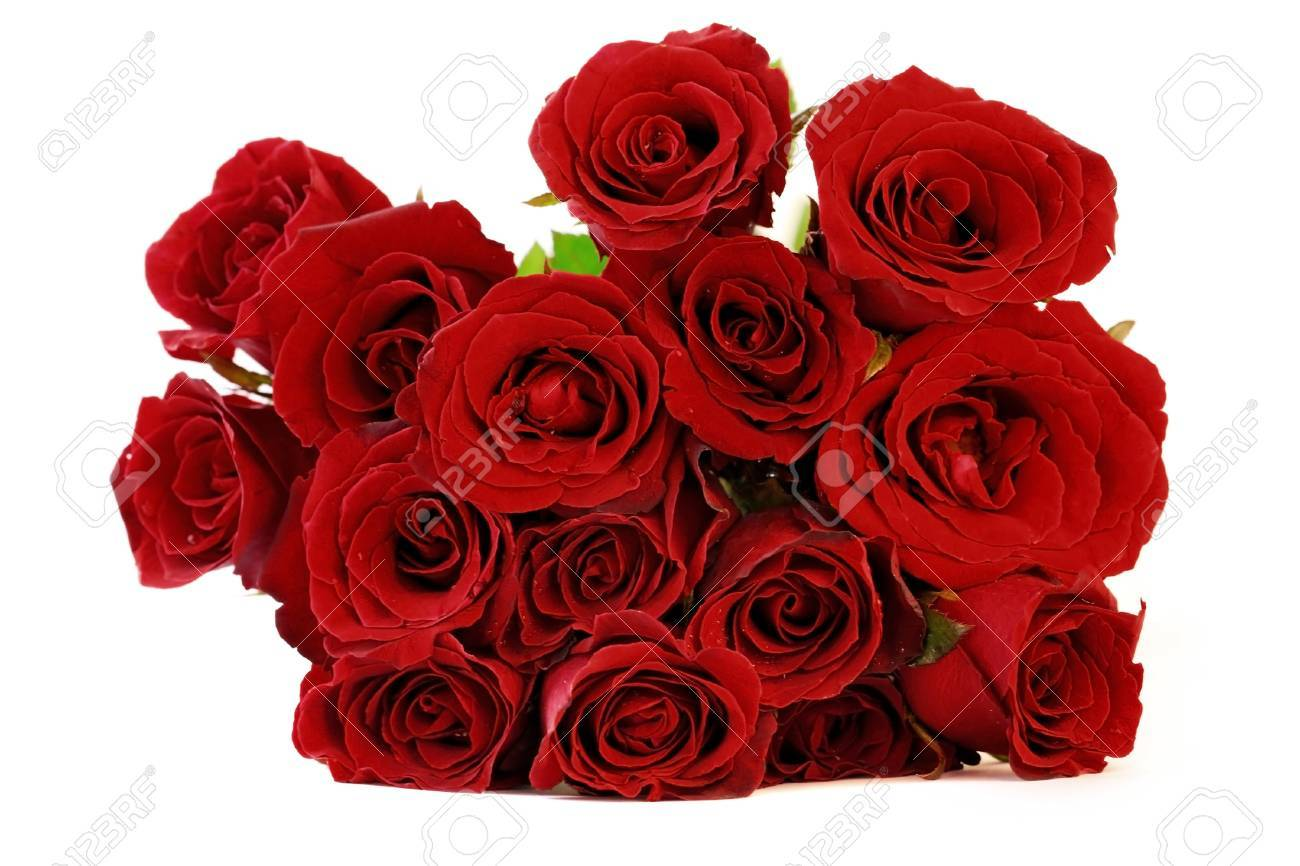 Maroon Red Roses Bouquet On White Background Stock Photo, Picture ...