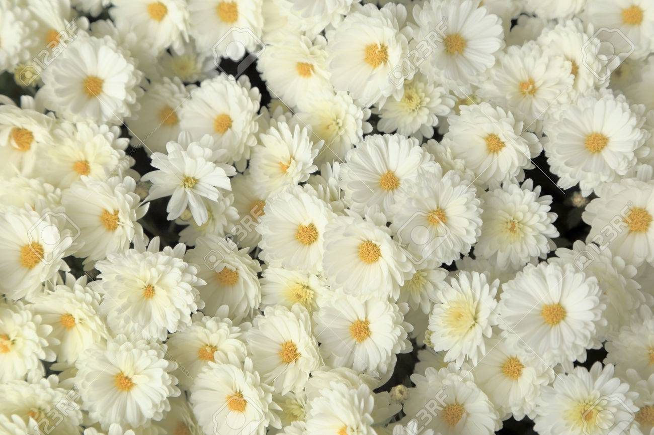 Top View Of White Chrysanthemum Flowers Bouquet For Background