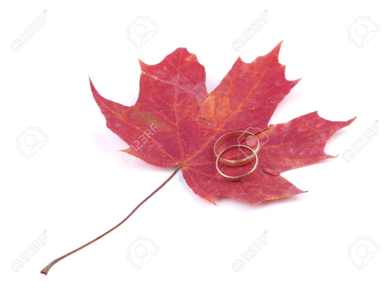 Wedding Rings And Maple Leaves On A White Background Stock Photo ...