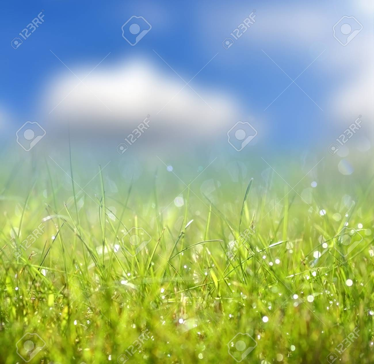 Green grass and blue sky Stock Photo - 16017881