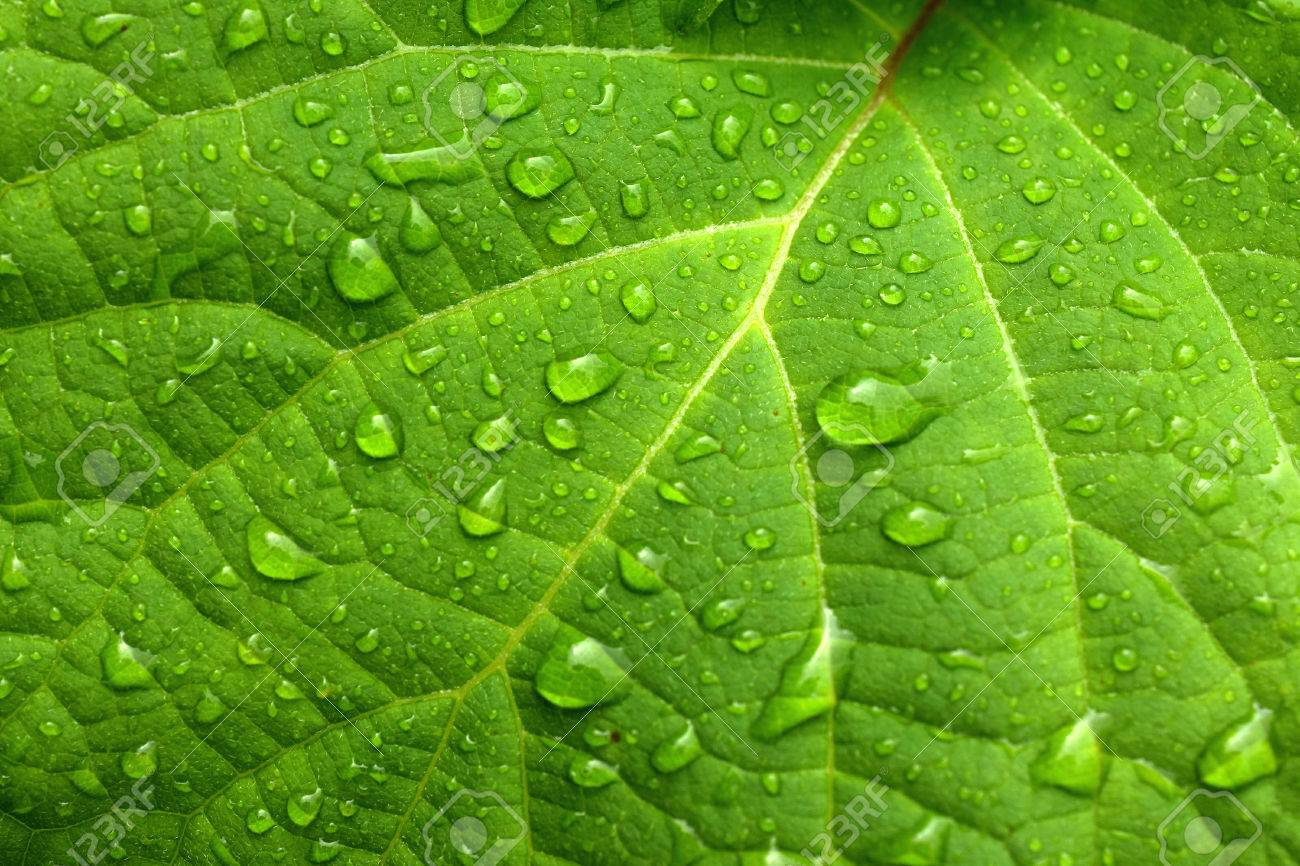 Green leaf and water drops - 62262975