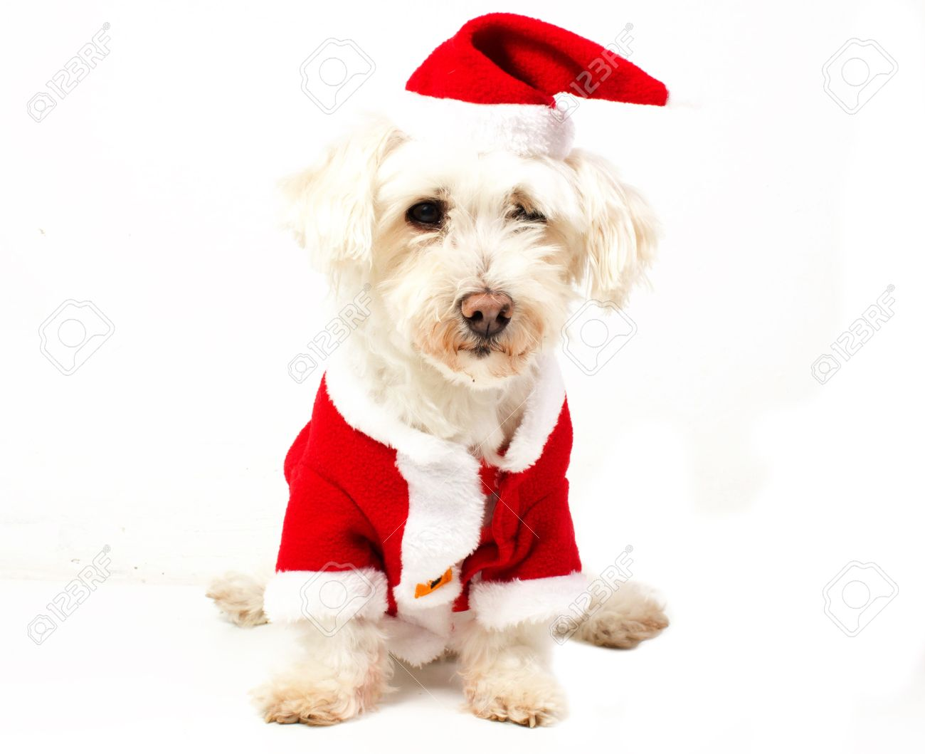 """Résultat de recherche d'images pour """"chien habillé en pere noel"""""""