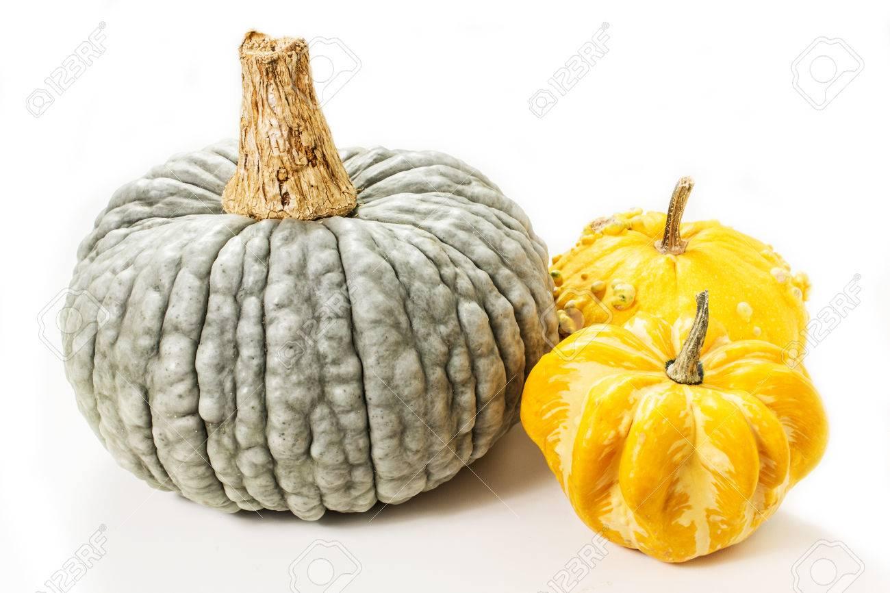 Bunte Kürbisse Halloween Kürbisse Erntedankfest Kürbis Sorten