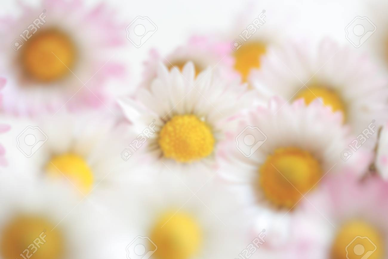 Blurred Of Daisy Vintage Flowers Color Style For Nature Background