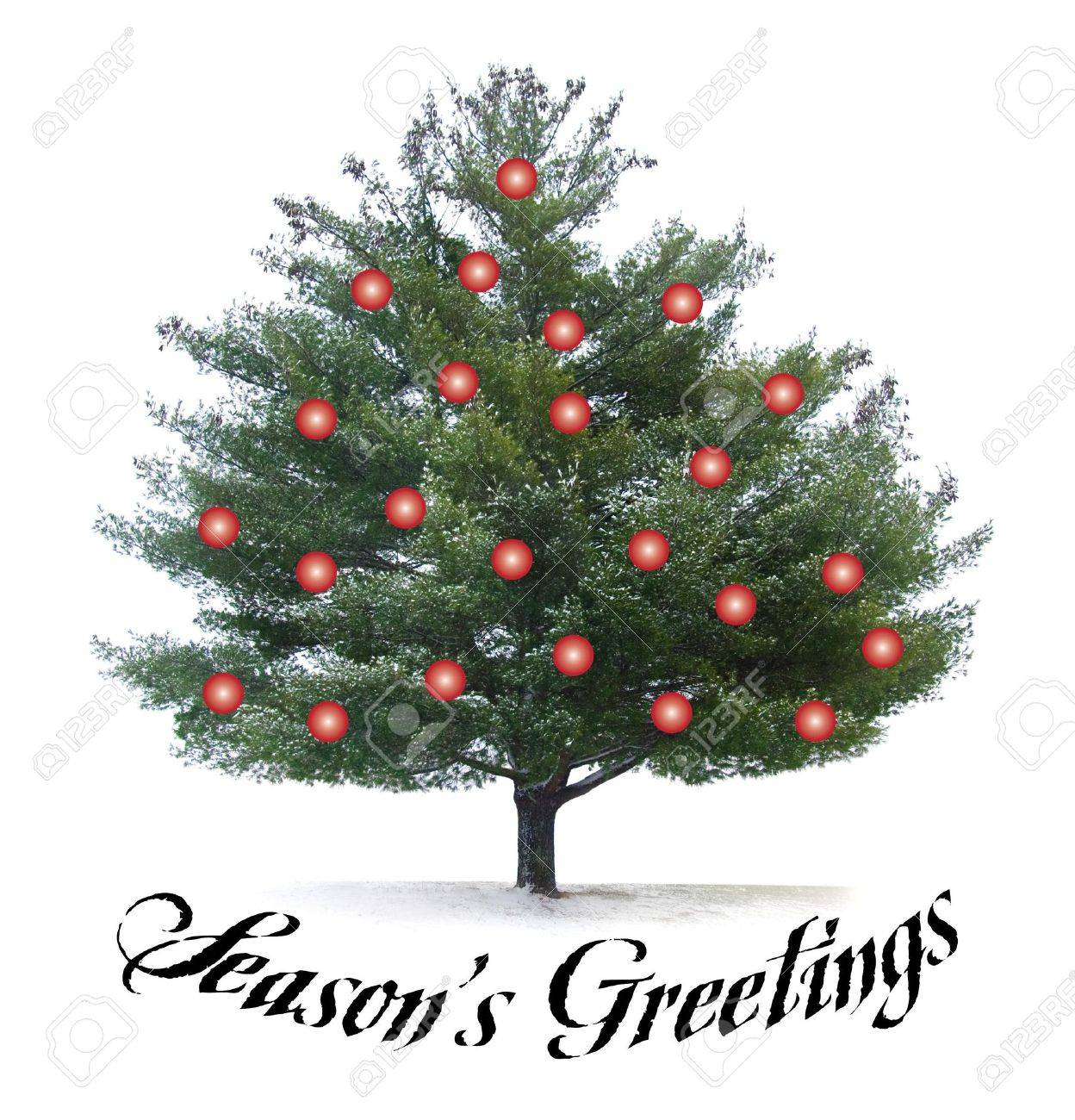 seasons greetings script type with pine tree and red christmas bulbs stock photo 8130982 - What Kind Of Trees Are Christmas Trees