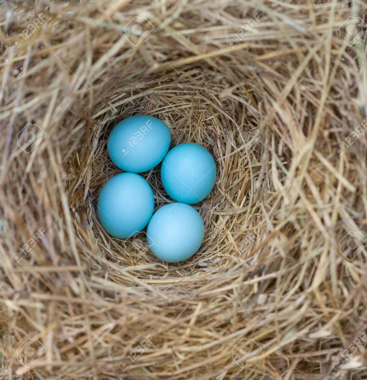 Eastern Bluebird Nest