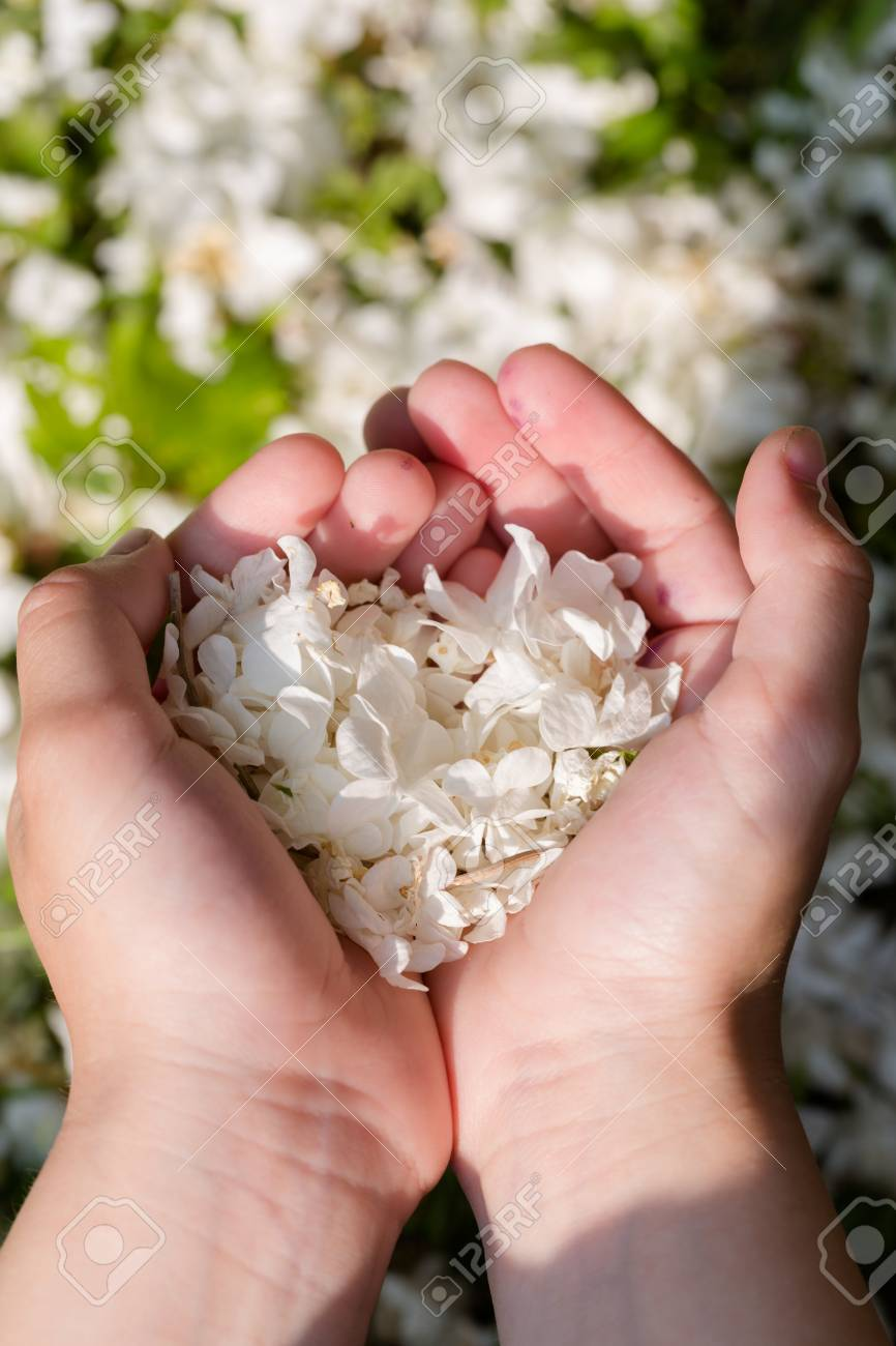 giving a flower as a proof of love stock photo picture and royalty