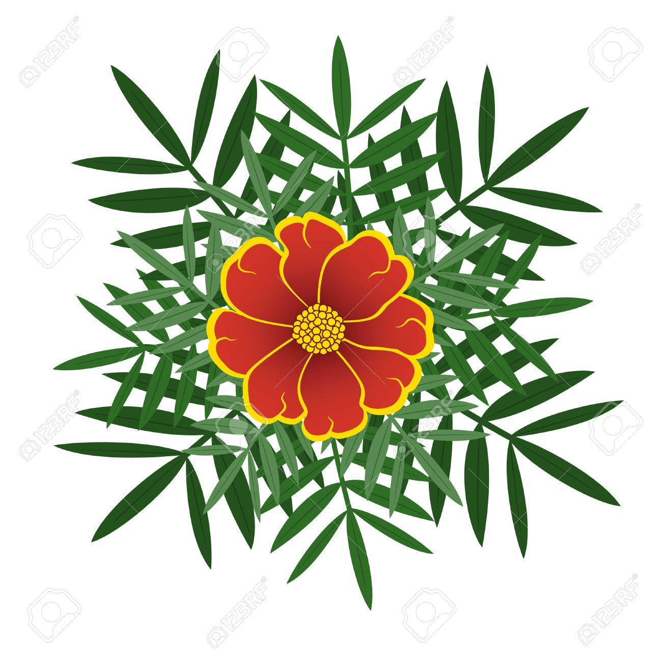 Orange Marigolds Blooming With Green Leaves Royalty Free Cliparts ...