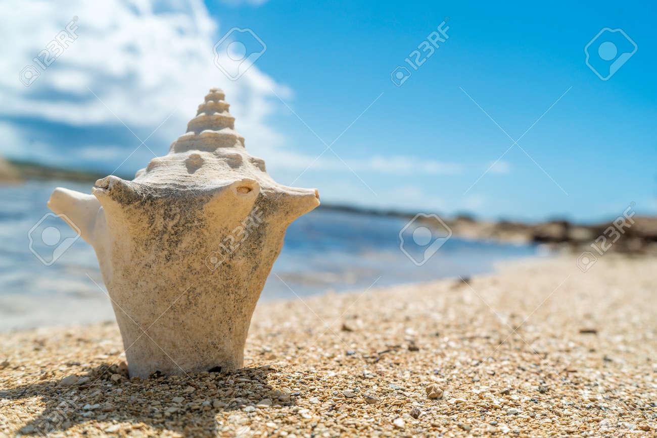 Seashell laying on sandy rocky beach - 152072707