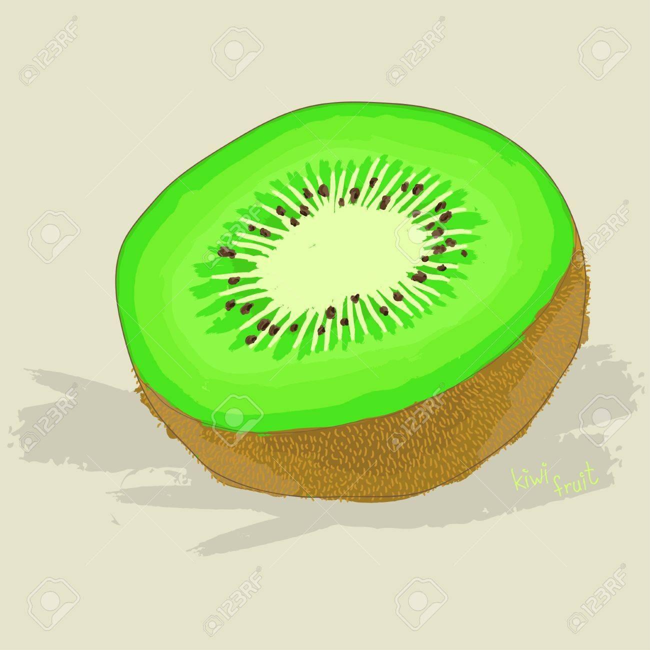 Kiwi Fruit Sketch Hand Drawn Fresh Kiwi Fruit