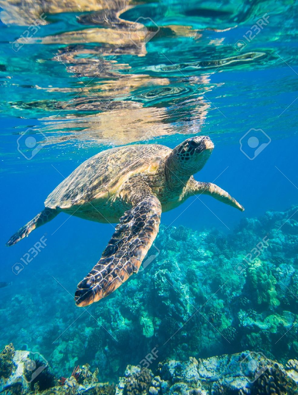 green sea turtle swimming in ocean sea Stock Photo - 12000817