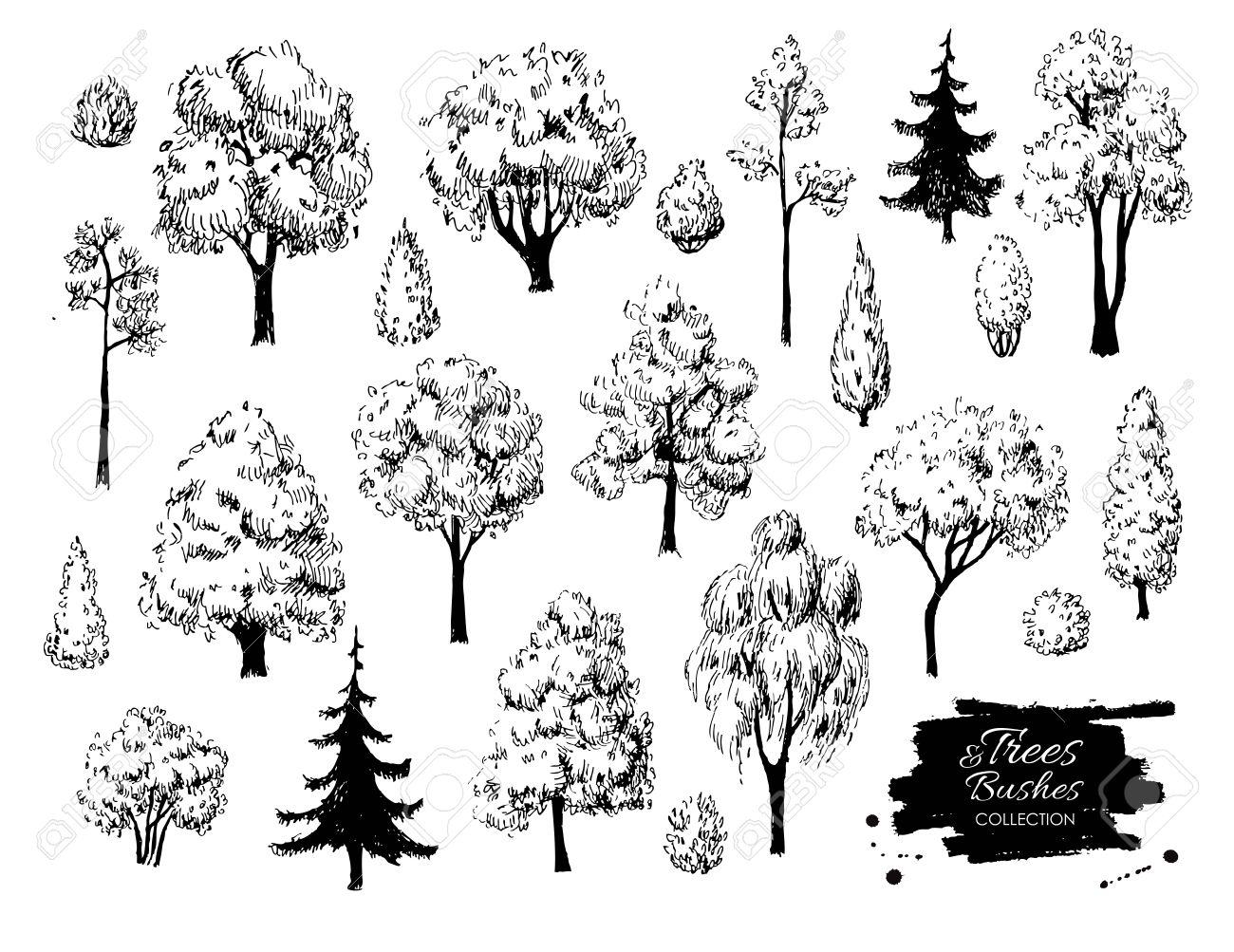 große reihe von hand gezeichnet baum skizzen. künstlerische