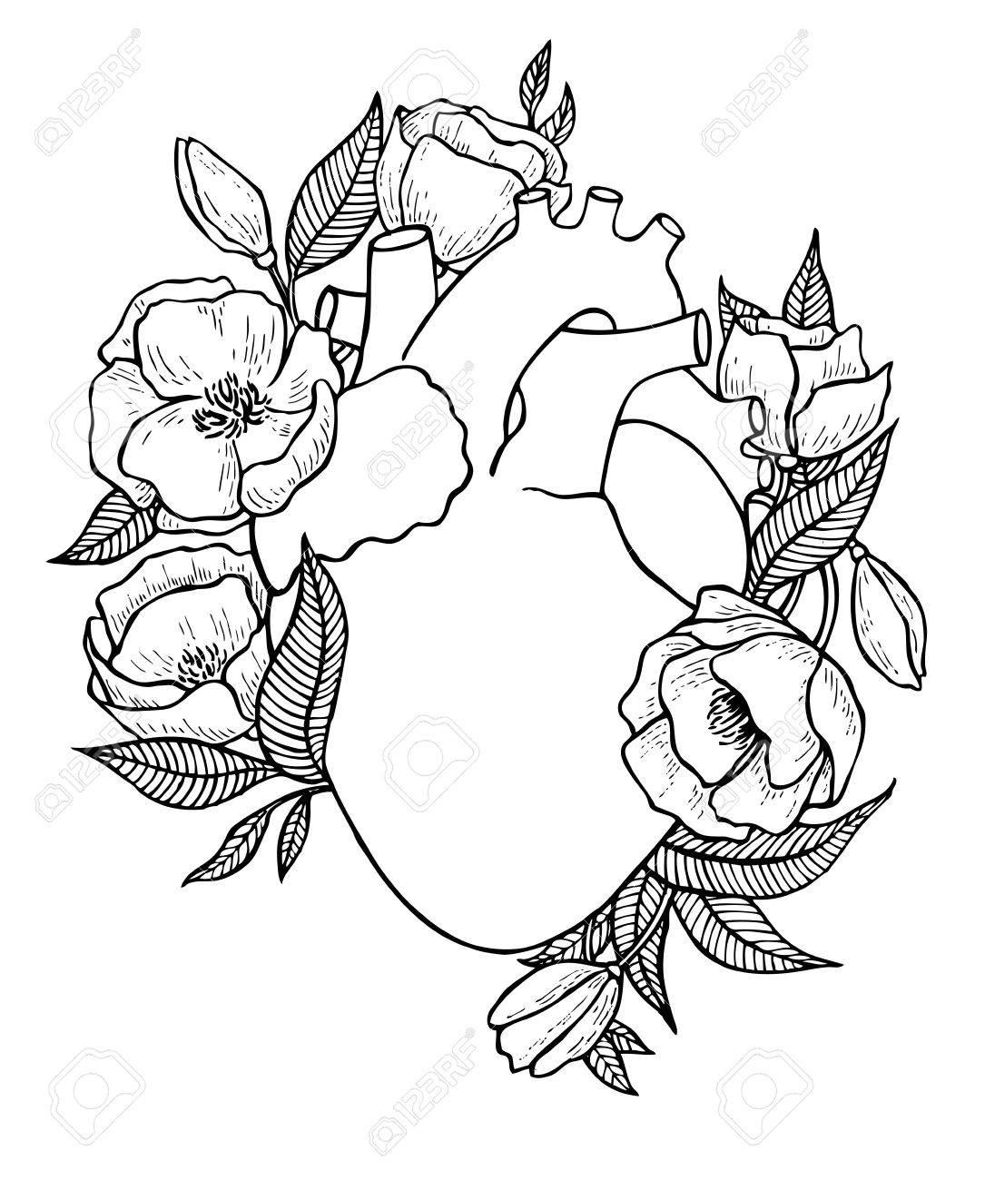 Ilustración Del Corazón Humano Con Flores. Grande Para La Tarjeta De ...