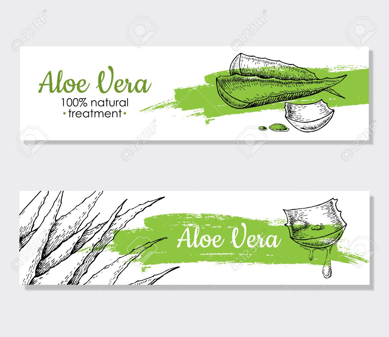 Vector aloe vera hand drawn illustrations. Detailed drawing. Aloe Vera banner, poster, label, brochure template for business promote. - 54859522