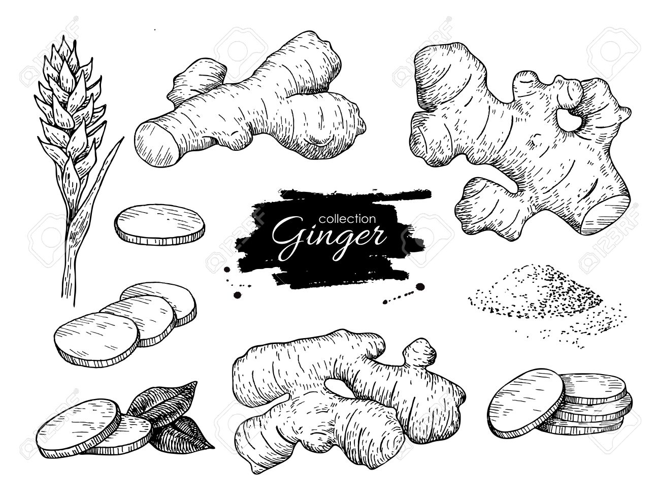 Vector hand drawn Ginger set. Root, ginger pieces and flower. Engraved style illustration. Herbal spice. Detox food ingredient. - 57182527