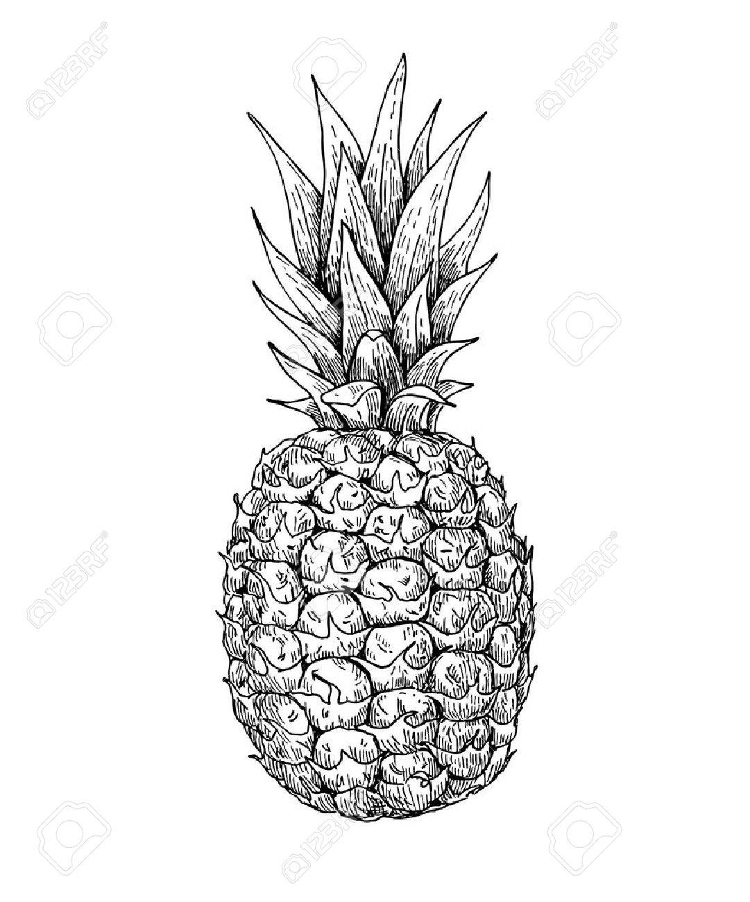 pineapple drawing clip art affordable laughing pineapple vector