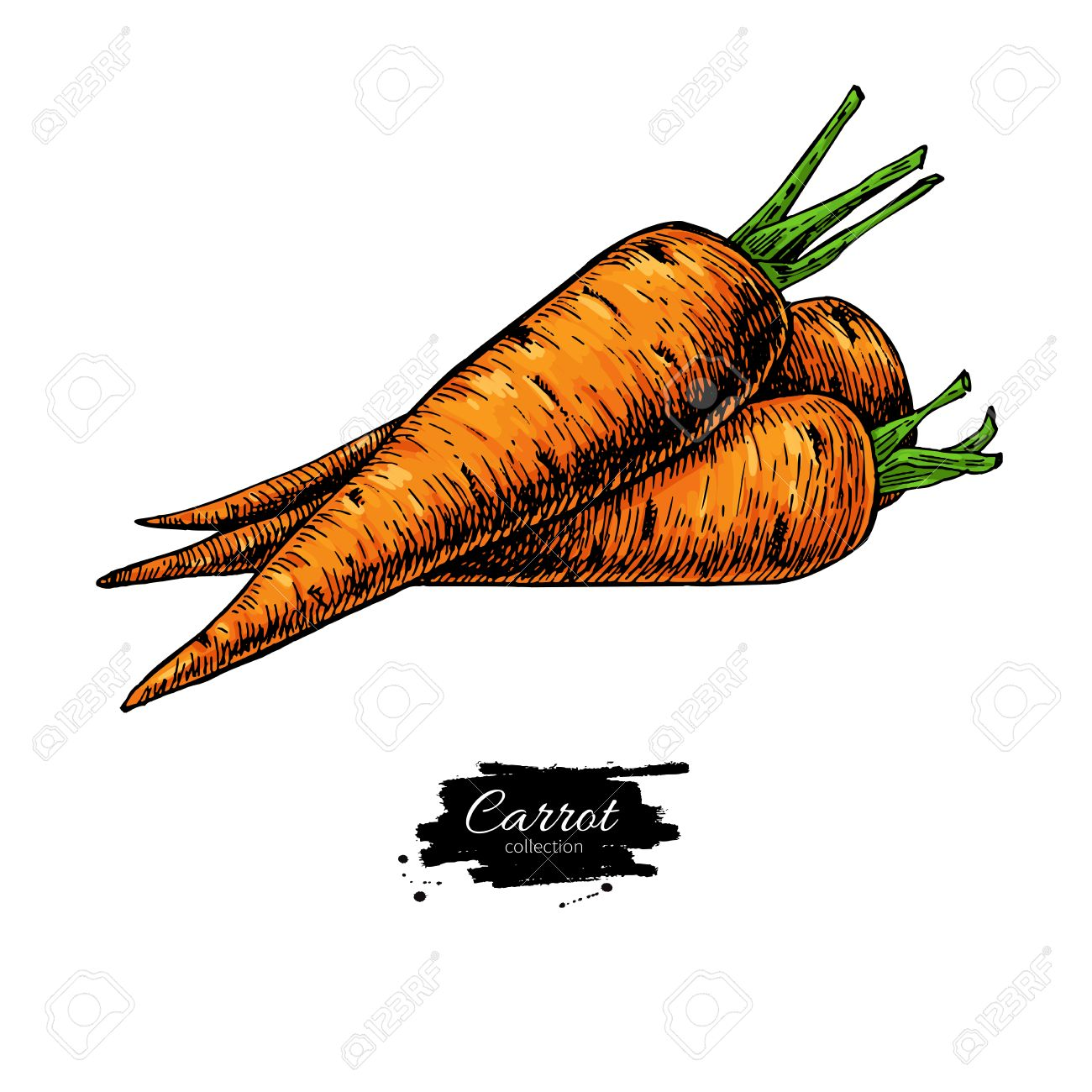 Dibujado A Mano Zanahoria Ilustración Vectorial Objeto Aislado De