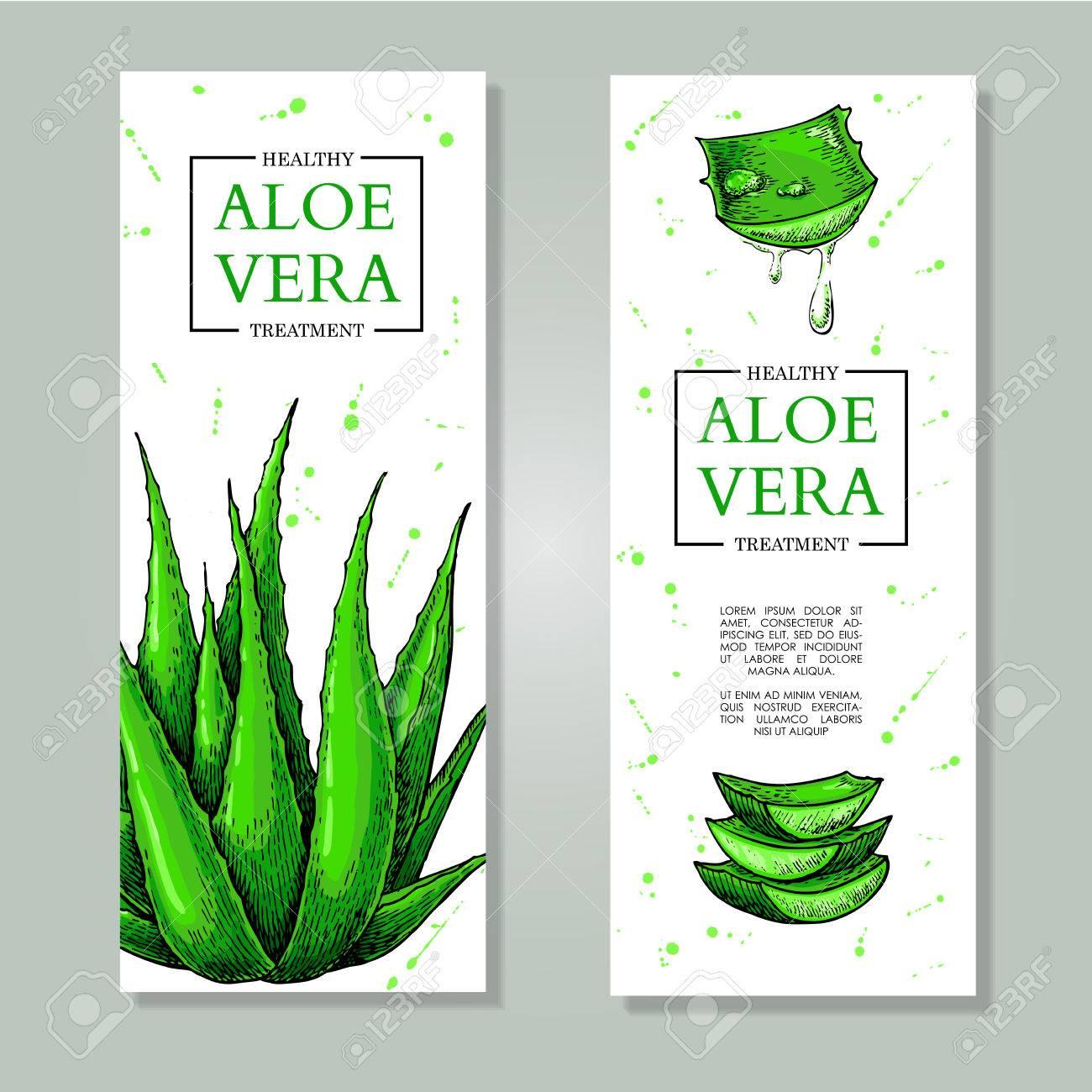 Vector Aloe Vera Bannières Dessinées à La Main Ingrédient Cosmétique Naturel Dessin Botanique De La Plante De Citronnelle Traitement à Base De