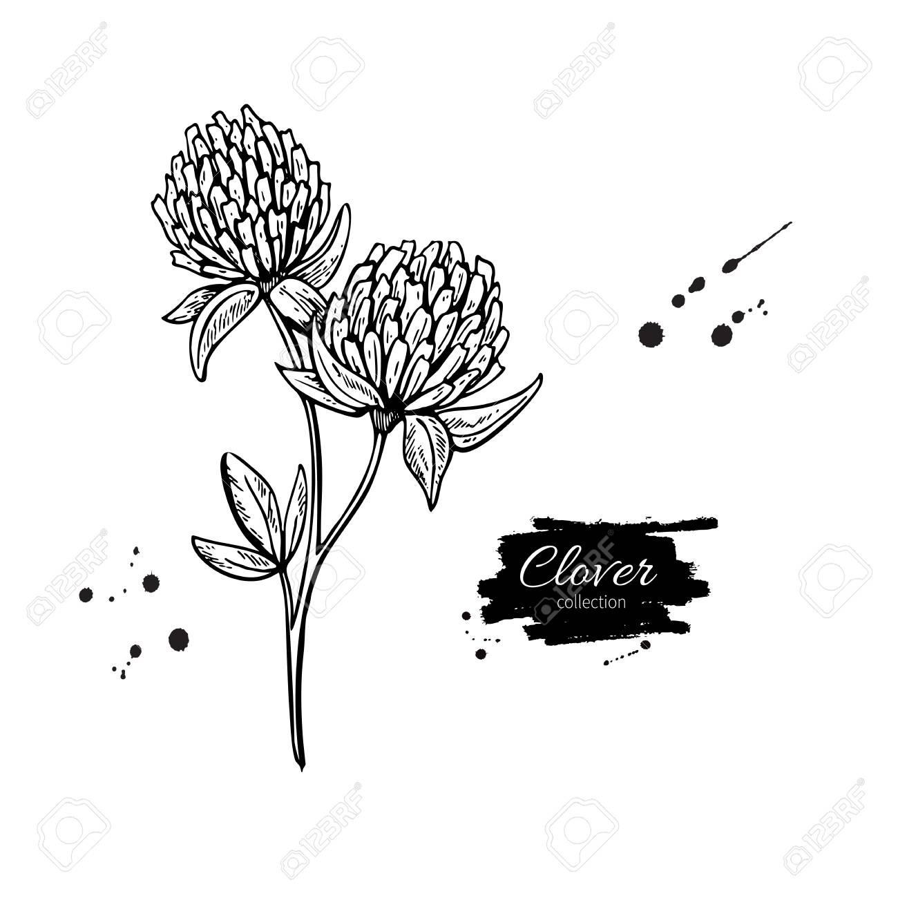 Trèfle Fleur Vecteur Dessin Ensemble Plante Et Feuilles Sauvages Isolées Illustration De Style Gravé à Base De Plantes