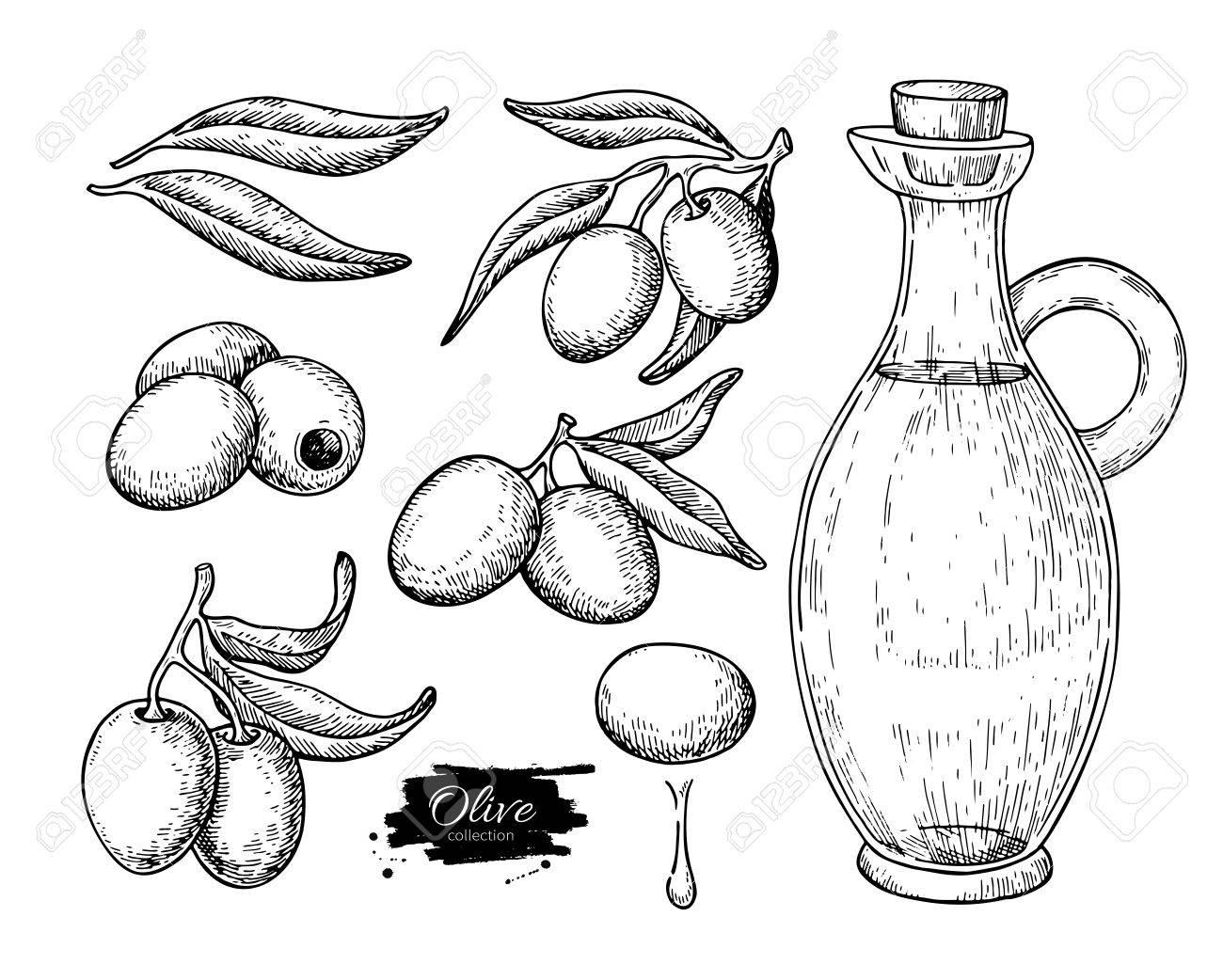 Coloriage Arbre Dolive.Bouteille D Huile D Olive Et Branche D Olivier Vector Illustration