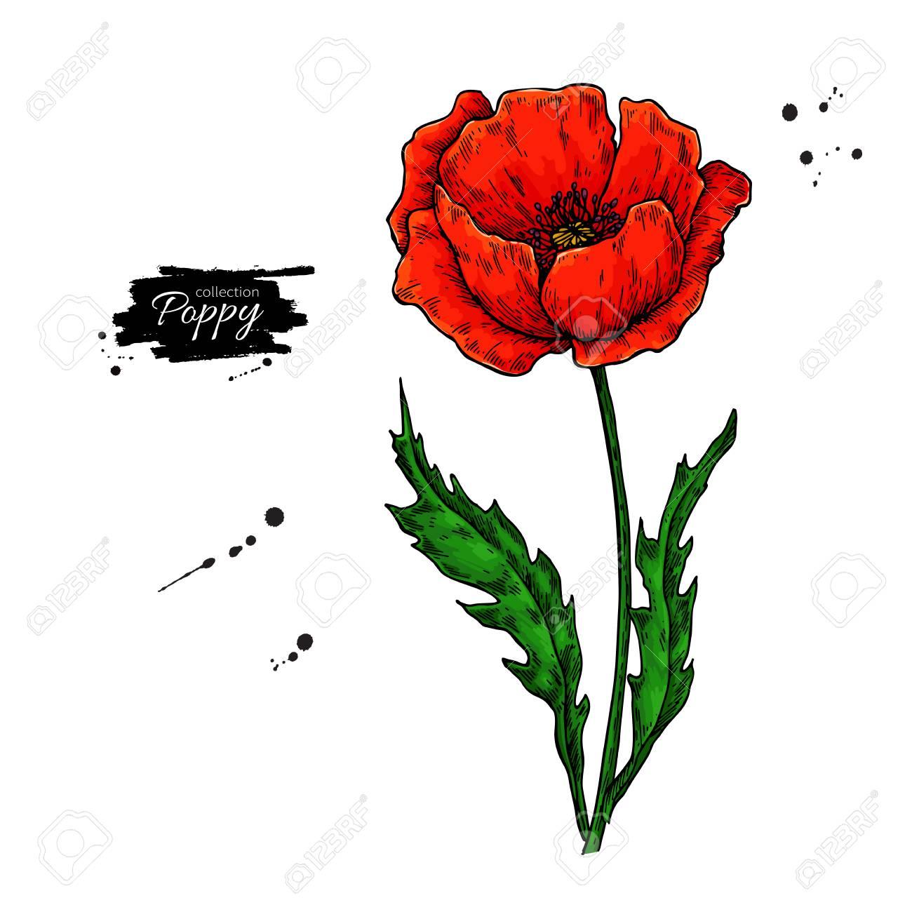 Poppy flower vector drawing set isolated wild plant and leaves poppy flower vector drawing set isolated wild plant and leaves in bouquet herbal artistic mightylinksfo