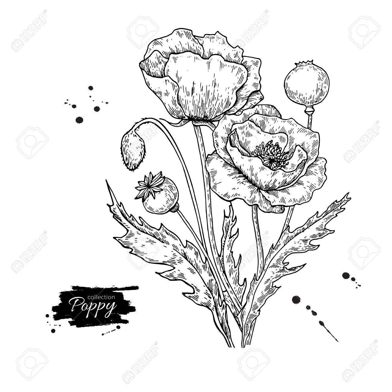 Poppy flower vector drawing set isolated wild plant and leaves poppy flower vector drawing set isolated wild plant and leaves stock vector 83310688 mightylinksfo